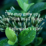 Grow in Christ in all things
